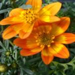 Bisinger Blumen Balkon